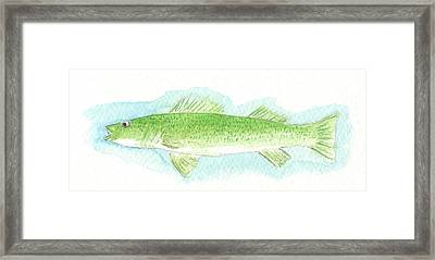 Walleye No.2 Framed Print
