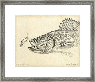 Walleye Pencil Study Framed Print by Jon Q Wright