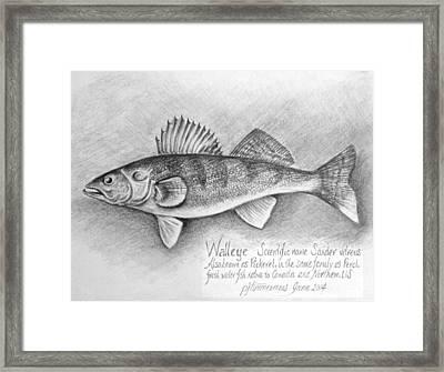 Walleye  Framed Print by PJ Timmermans