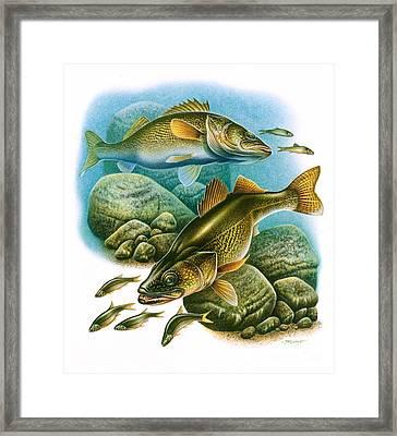 Walleye Vignette Framed Print
