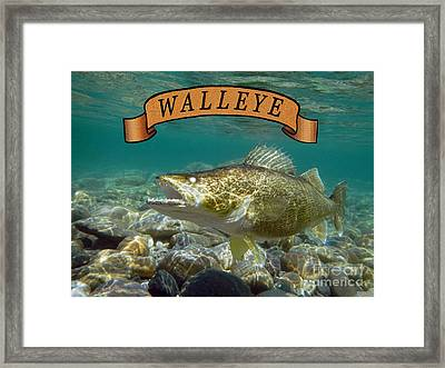 Walleye With Banner Framed Print
