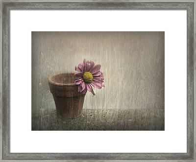 Wallflower Framed Print by Jennifer Woodward