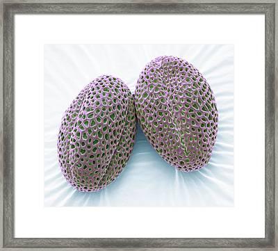 Wallflower Pollen Grains Framed Print