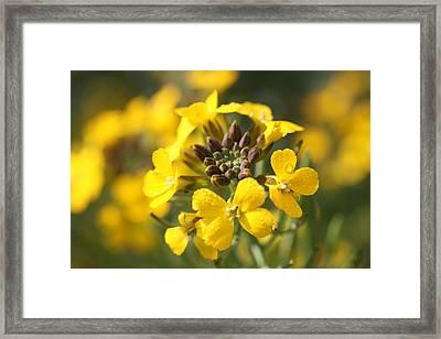 Wallflowers Framed Print by Mark Severn