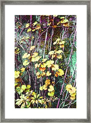 Wallington Hall Vine Framed Print
