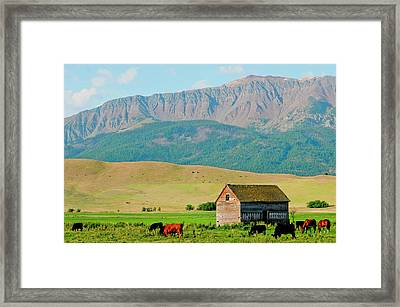 Wallowa Mountains And Barn In Field Framed Print by Nik Wheeler