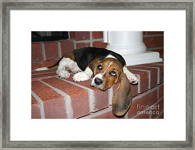Wally And Ears Framed Print
