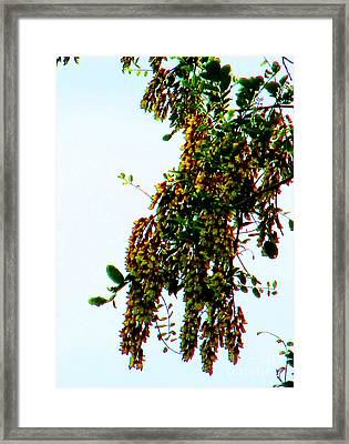 Walnut Blooms Framed Print by Tina M Wenger