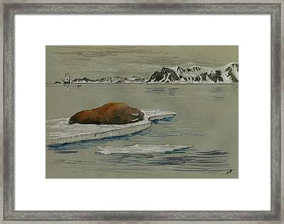 Walrus On The Iceberg Framed Print by Juan  Bosco