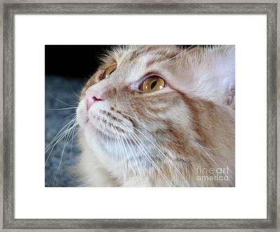 Walter The Cat Framed Print by Deborah Smolinske