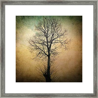 Waltz Of A Tree Framed Print by Taylan Apukovska