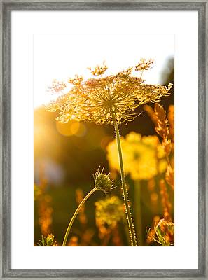Warmth Of The Sun Framed Print