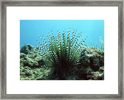 Wana Framed Print by Suzette Kallen