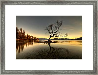 Wanaka - That Tree 1 Framed Print