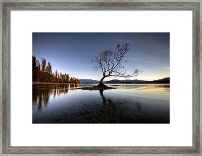 Wanaka - That Tree 2 Framed Print