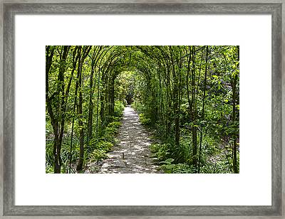 Wandering The Garden Framed Print