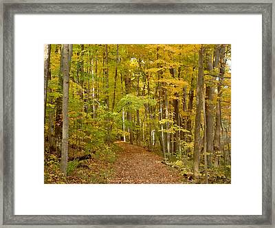 Wandering Trail 6 Framed Print by BackHome Images