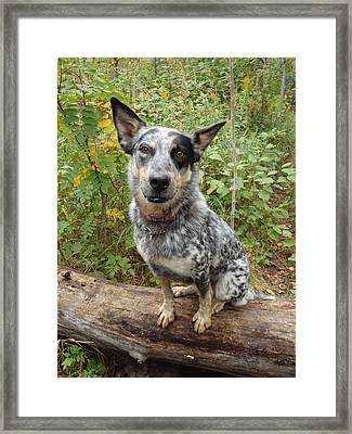 Wanna Play Framed Print by James Peterson