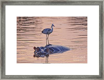 Want A Ride Framed Print