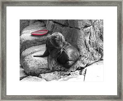 Want To Play Framed Print by Chad Thompson