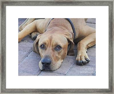 Want To Play  Framed Print by Chrisann Ellis