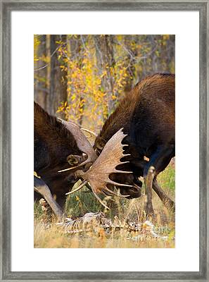 Framed Print featuring the photograph War In The Woods by Aaron Whittemore