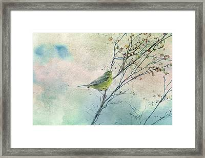 Warbler In A Huckleberry Bush Framed Print by Peggy Collins