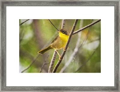 Warbler In Sunlight Framed Print