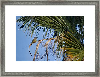 Warbler Out On A Limb Framed Print by Linda Brody