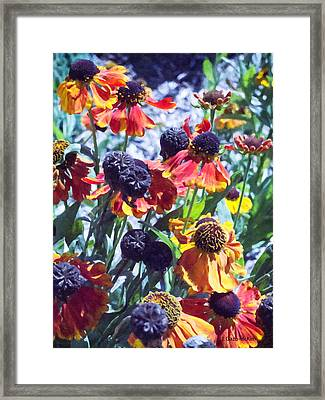 Warm Autumn Blooms Framed Print