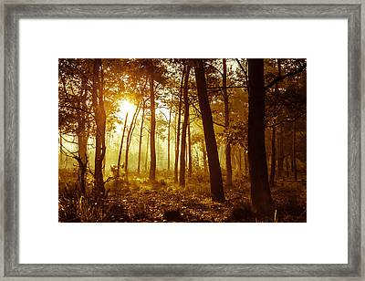 Warm Autumn Morning Framed Print by Semmick Photo