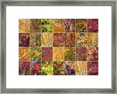 Warm Autumn Quilt Collage Framed Print by Carol Groenen