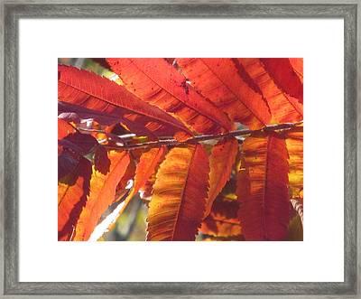 Warm Autumn Sun Framed Print by Loretta Pokorny