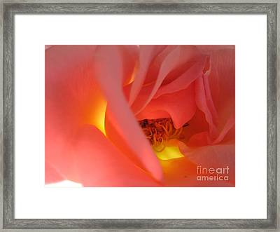 Warm Glow Pink Rose 2 Framed Print by Tara  Shalton