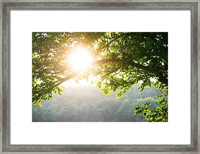 Summer Haze Framed Print by Shelby  Young