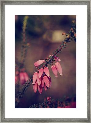 Warm Hearts Framed Print by Laurie Search