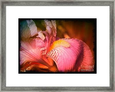 Warm Iris - Digital Art Framed Print by Carol Groenen