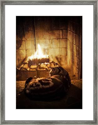 Warm Kitty Framed Print by April Reppucci