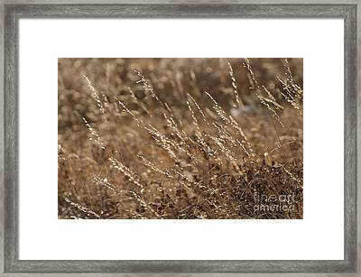 Warm Light On A Winter's Day Framed Print