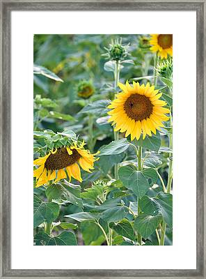 Warmed By The Sun Framed Print