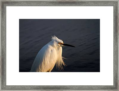 Warming Sunrays Framed Print
