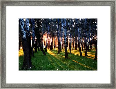 Warming Up The Land Framed Print by Daniel Zrno