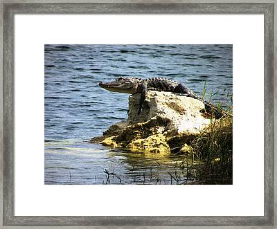 Warming Framed Print by Will Boutin Photos