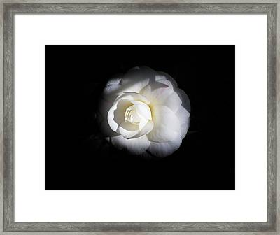 Warmth Of The Morning Framed Print by Mark Lucey