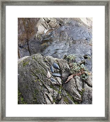 Warrior Crossing  Framed Print by Tim Rice