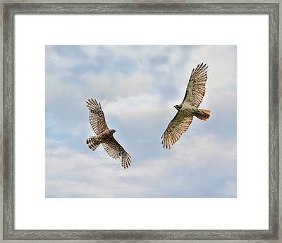 Warriors Of The Sky Framed Print by Jai Johnson