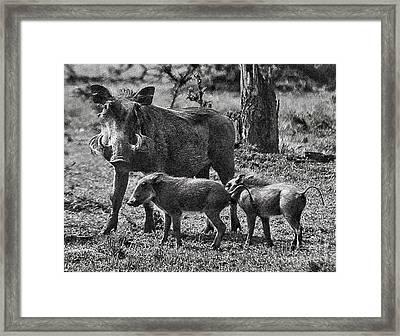 Warthog Family  Framed Print by Gary Keesler