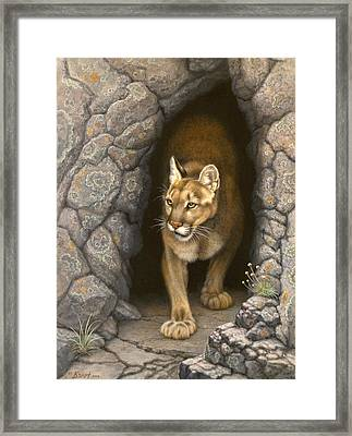 Wary Appearance-cougar Framed Print by Paul Krapf