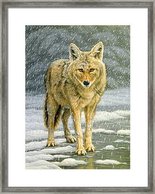 Wary Approach - Coyote Framed Print