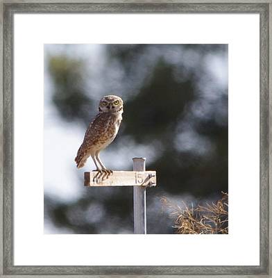 Framed Print featuring the photograph Wary Gaze by David Rizzo